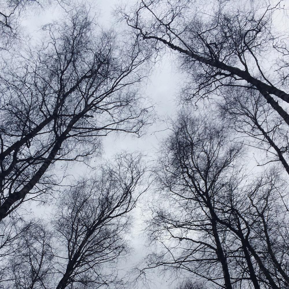 Blick zum Himmel, nackte Birkenäste tanzen.