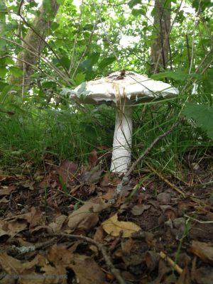 Ein Pilz, von unten fotografiert